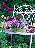 Syringa vulgaris in bright green basket on white bench, Aquilegia