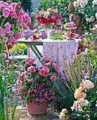 Rosa, Calibrachoa in pot, behind table