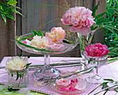 Blossoms of Paeonia, grasses in shells