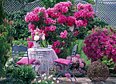 Blue garniture on spring bed with rhododendron