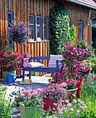 Terrasse am Haus, Kübelpflanzen in Flechtkörben