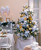Abies nordmanniana (Nordmanntanne) als Weihnachtsbaum in weiß und gold