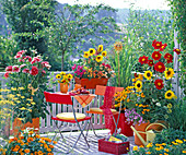 Balcony with Dahlia, Helianthus, Antirrhinum