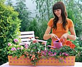Plant orange metal box with geraniums and magic bells