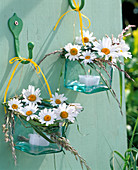Lanterns with profusion of Argyranthemum and grasses