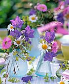 Campanula (bellflower), Erigeron (fleabane), Agryanthemum