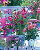 Gladiolus (Dwarf Gladiole), Dahlia
