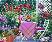 Dahlia balcony, Dahlia (Dahlia), Petunia (petunia), Gladiolus