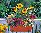 Orange metal box with helianthus (sunflower)
