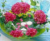 Hydrangea (Hydrangea), tendrils of Ipomoea (Morning Glory)