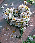 Heart of Argyranthemum, Campanula