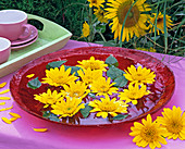 Helianthus decapetalus flowers in glass bowl