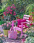 Rose 'Medley Pink' (Noack rose)
