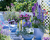 Blue balcony with Delphinium, Salvia farinacea