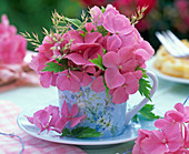 Pink Hydrangea, grasses in light blue espresso cup