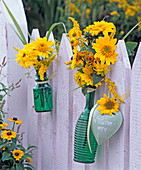 Helianthus (Sunflower), Helenium (Sun Bride), Heliopsis