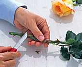 Removing pink (rose) spines with a knife