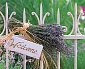 Lavandula bouquet, tied with bast to white fence, sign 'Welcome'