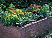 Raised flower bed with mixed culture