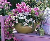 Schale bepflanzt mit Argyranthemum (Margerite), Petunia (Petunie)