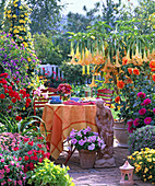 Terrace with red furniture, Datura, Dahlia