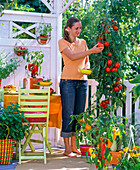 Woman is harvesting tomatoes on vegetable balcony with paprika and tomatoes