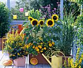 Yellow Balcony Sunflowers, Goldfish pond, Marigolds, Zinnia