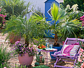 Palm terrace with wooden deck chair
