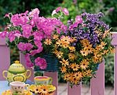 Basket balcony box, Petunia Easy Wave 'Rosy Dawn' (Petunia)