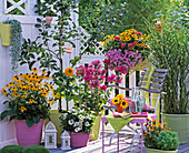 Late summer balcony with perennials and apple tree