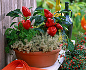 Terracotta bowl with capsicum (paprika) and herbs