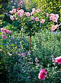 Pink (Rose) Stem, Light Pink, Tightly blooming