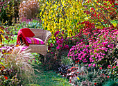 Autumn, woody plants, perennials, seat