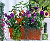 Autumnal flower box in orange and purple