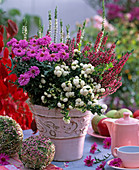 Autumn, pot, berries, white, pink, red