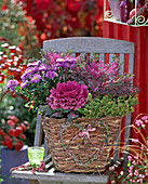 Basket of bark planted with brassica (ornamental cabbage)