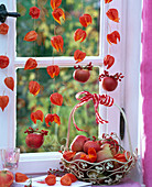 Physalis threaded anf hung on the window, Malus, basket