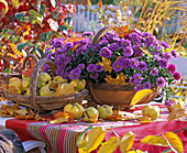 Purple aster, cydonia (quince) in baskets on the table, autumn leaves