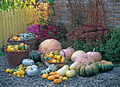 Various cucurbita on terrace in front of wall