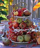 Malus on white etagere, decorated with Parthenocissus tendril