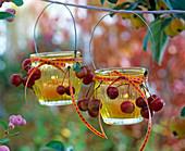 Malus (ornamental apple) on yellow lanterns, ribbons