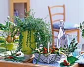 Satureja (savory) in green planter, Phaseolus (beans)