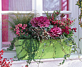 Brassica (ornamental cabbage), Pernettya (peat myrtle), Viola cornuta