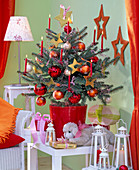 Picea pungens 'Glauca' as a living Christmas tree, decorated