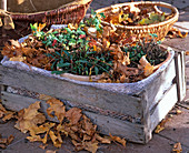 Hanging perennials in the container
