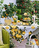 Decorate lemons and limes