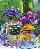Galanthus (Snowdrop), Crocus, Iris reticulata