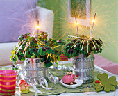 Oxalis tetraphylla canned decorated with sparklers