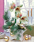 Pinus and Hippeastrum, with golden Christmas tree balls