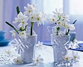 Strauß aus Narcissus tazetta (Tazetten, duftend) in weißen Bechern